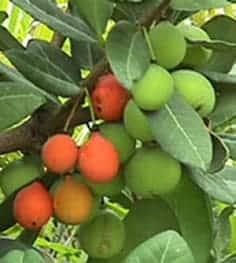 photo-fruits